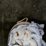 Mies & Co snuggle bunny big offwhite knuffel konijn wit